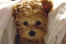 So Cute & Precious