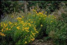 North Texas Plants / by Pamela Tuckey Photography
