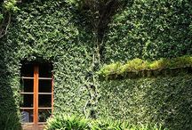 OUTSIDE / Outdoor inspiration. Gardens and things that grow.