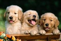 ABD | Cute Animals / We love adorable animals.