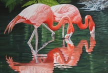 Flamboyant Flamingos / by Susan Barr