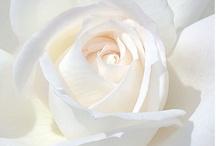 FlowerPower / by Lacey Harrelson