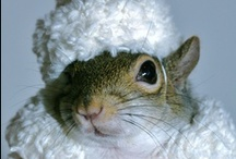 Portraits / by SugarBush Squirrel®