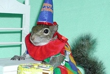 Party Time!!! / by SugarBush Squirrel®