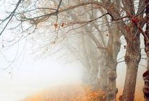 SWEET AUTUMN - fashion & lifestyle / Inspiration borad to cheer up the chilly weather