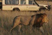 Africa / by Rachel Mulligan