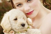 Wedding Pets  / by Svetlana