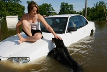 Pets / Pet care, at home, camping, or in emergency situations.