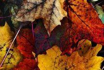 Fall & Winter Colors