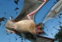 a colony of bats / by wild rose