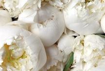 Pivoines et autres fleurs / Composition florales poétiques