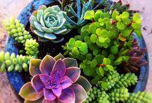 M Y  G A R D E N / How does my garden grow?