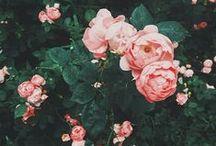 Spring Forward / by Valerie Forjan