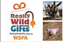 The Gift of Giving / by World Animal Protection Australia
