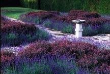 Gardening / by Serena Haiku