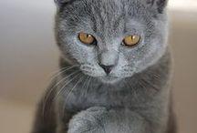 Pets / by Serena Haiku