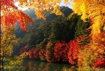 BEAUTIFUL FALL / by Linda Guedel