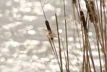 Photography - Nature / by Serena Haiku