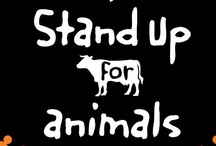 Live export campaign / by World Animal Protection Australia