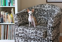 Pets {Home} / Pinteresting ideas for making your Irresistible Pet's feel at home! After all, they are part of the family! IrresistiblePets.net