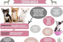Pets {Tips} / Helpful articles, tips, and infographics for pet parents!