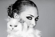 Posh Pets / Posh-Luxe-Diva PETS!