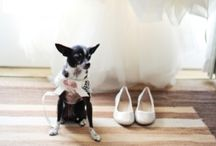 Pets {Weddings} / Ideas and inspiration to include your IRRESISTIBLE pet in your wedding day! See more at IrresistiblePets.net