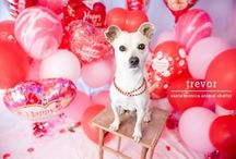 Valentine's Day Pets / Valentine's Day inspiration for pets! Check out my blogs: IrresistiblePets.net & Irresistibleicing.com for more!