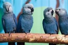 Irresistible Birds / Tweet, Tweet! Irresistible Birds of a Feather, Flock together!