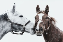 Irresistible Horses