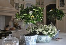 Kitchen Decor / by Amy Meeler Holloway