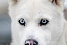 Best Friends/Dogs / by Nancy Fish