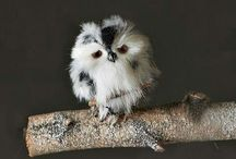 [ owls ] / The cutest bird. / by Kimberly Reed Niznik