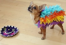 Cinco de Mayo Pets / Celebrate Cinco de Mayo with your pets! See more at IrresistiblePets.com