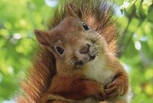Squirrely / by Sunshine Stitches