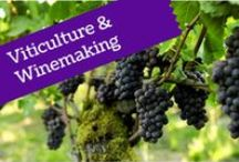 Viticulture & Winemaking / Everything you need to know about how grapes go from vine to bottle
