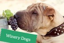 Winery Dogs / Canines in Wine Country