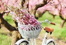 springtime favourites