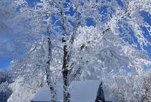 Walking in a Winter Wonderland / by Priya Ramanathan