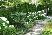 Dreamy Gardens / by Tattered Tiques