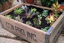 Succulents and other happy things / by Katherine Purnell