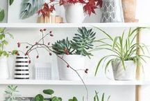 Zen Home / Ideas and products to help fill a home with zen and peace.