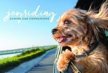 Joyriding, Canine Car Companions / Blissful woof images, Canine Bliss