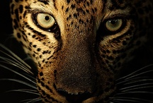 Animal Cuteness @Gazuntai.com