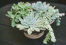 Plants, etc.