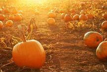 Fallish / Autumn