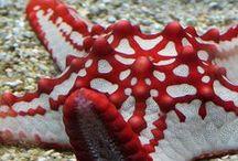 Sea creatures / by dfalcão