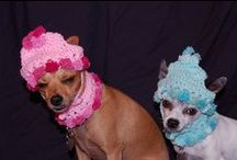 things to make for your pet / sweaters, hats and things for pets / by Donna Clemmens