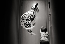 WOW! Pets / Amazing pets and amazing moments!