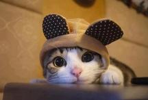 Too cute / by Jeanee Allen